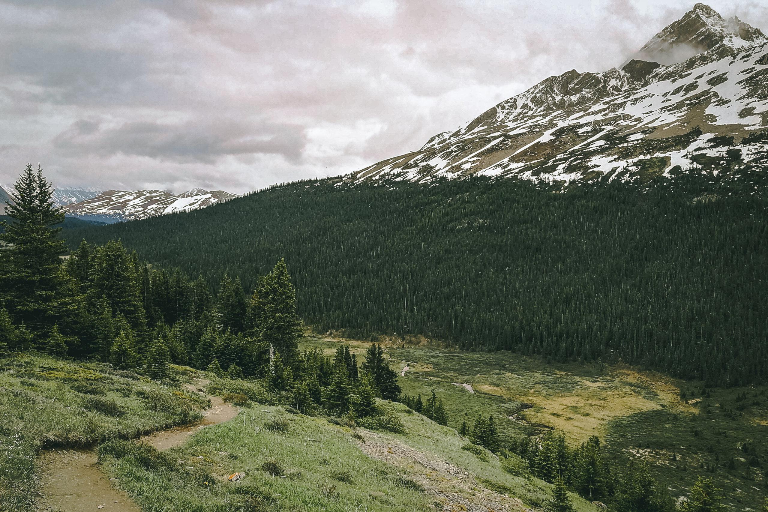 Auf dem Wilcox Pass Trail