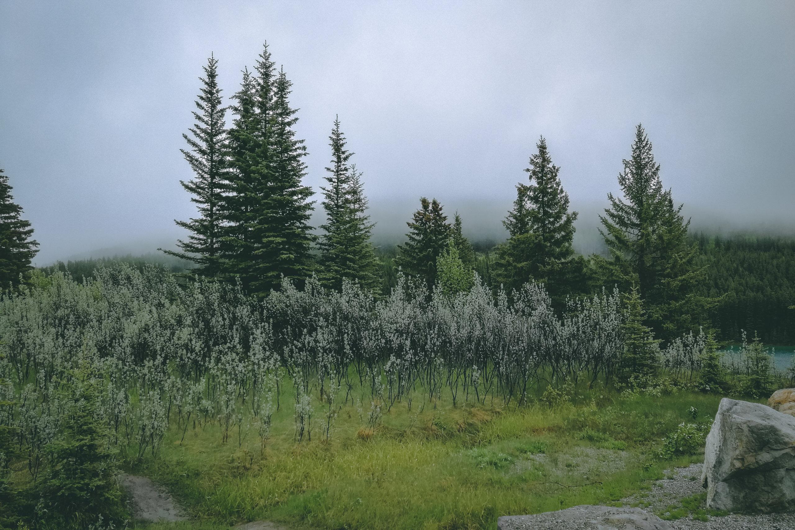 Mystik beim Two Jack Lake