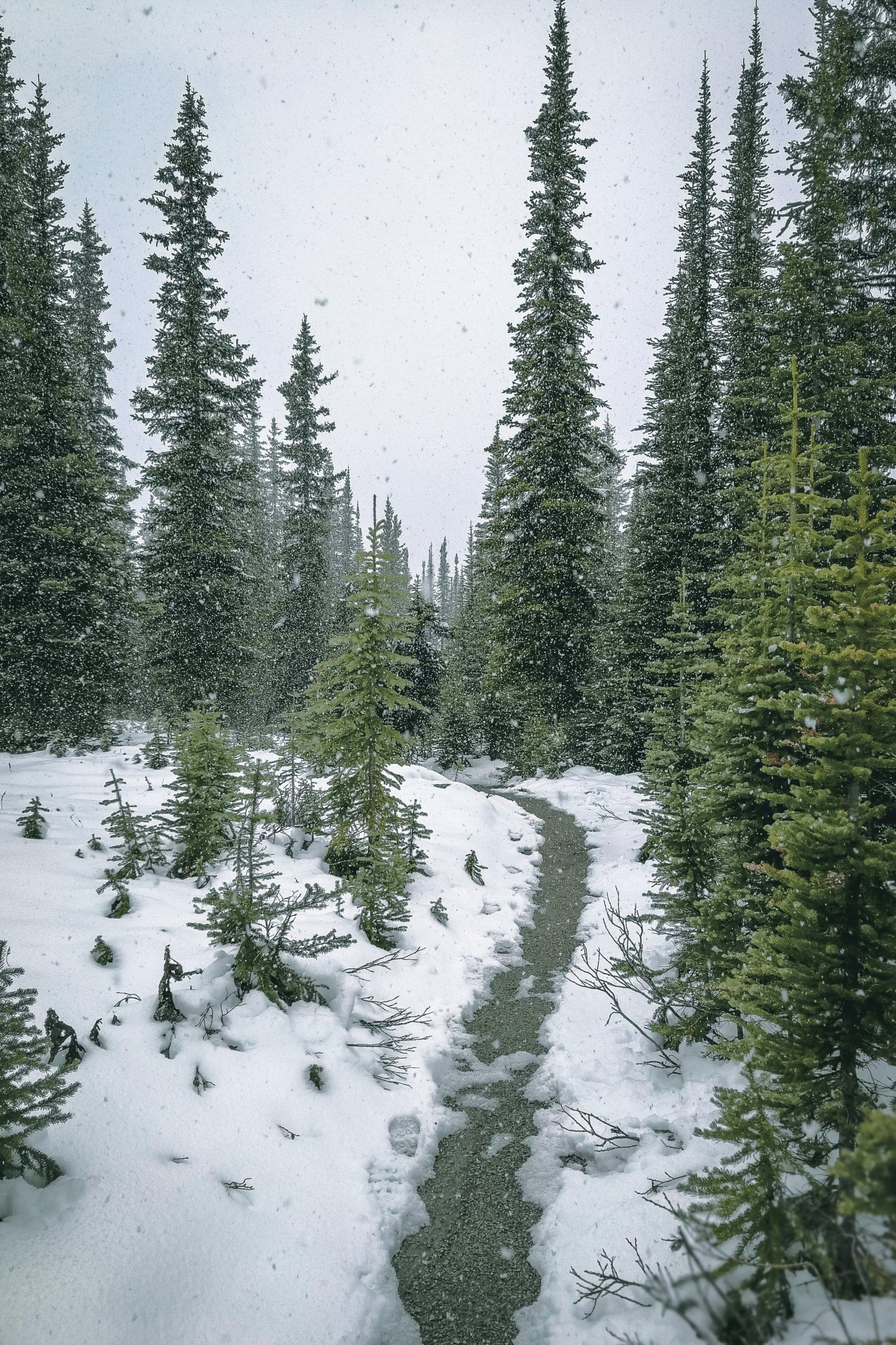 Der Trail am Peyto Lake