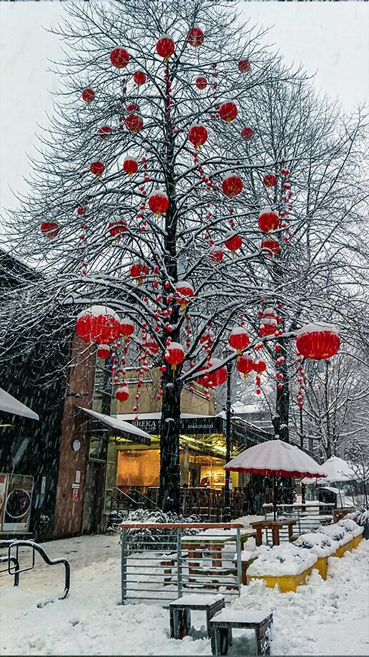 Baum mit chinesischen Lampions in Downtown Vancouver im Winter