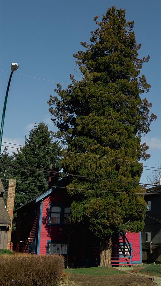 Baum vor rotem Haus in East Vancouver