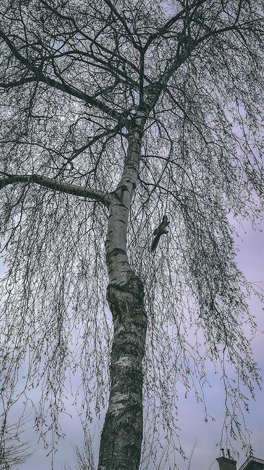 Eichhörnchen in Baumkrone