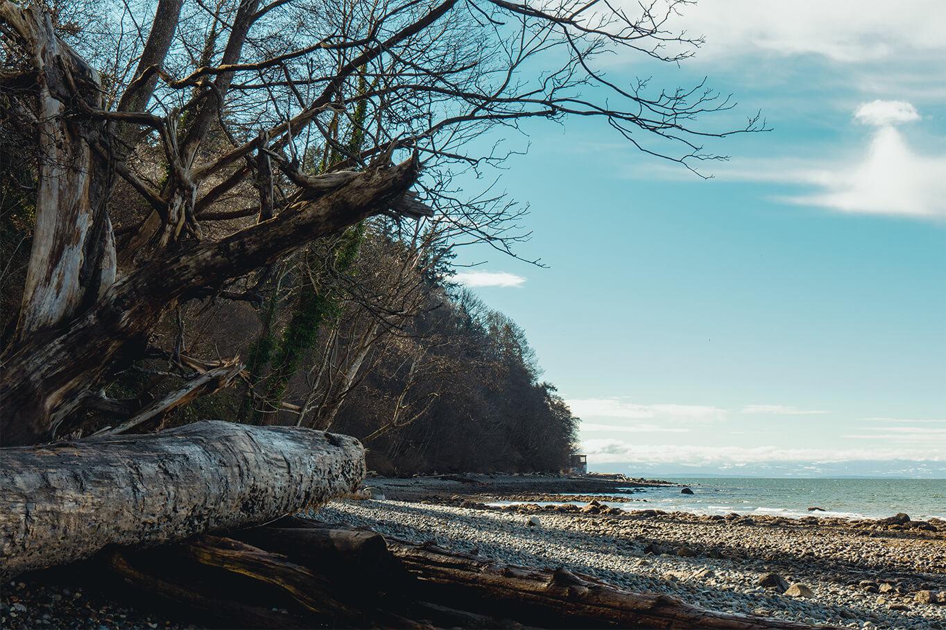Foreshore Trail - Steinstrand mit Bäumen