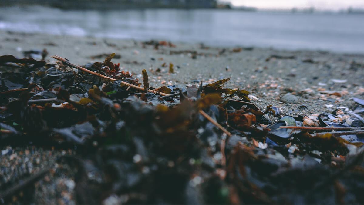 Kitsilano Beach - Algen am Strand