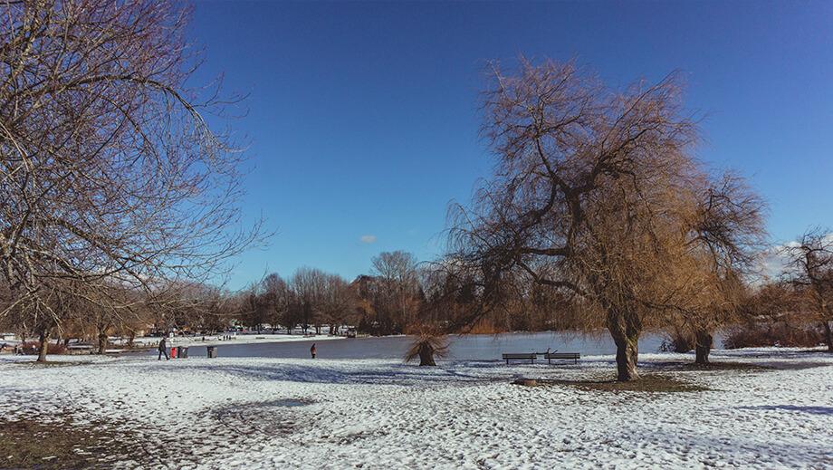 Blick auf Trout Lake mit Bäumen im Vordergrund