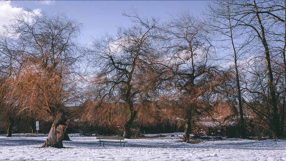 Drei blätterlose Bäume und eine Bank im Schnee