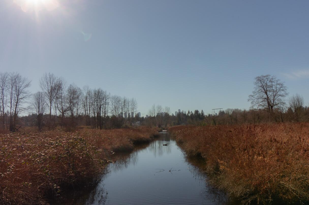Burnaby Lake - Kanal zwischen Schilf
