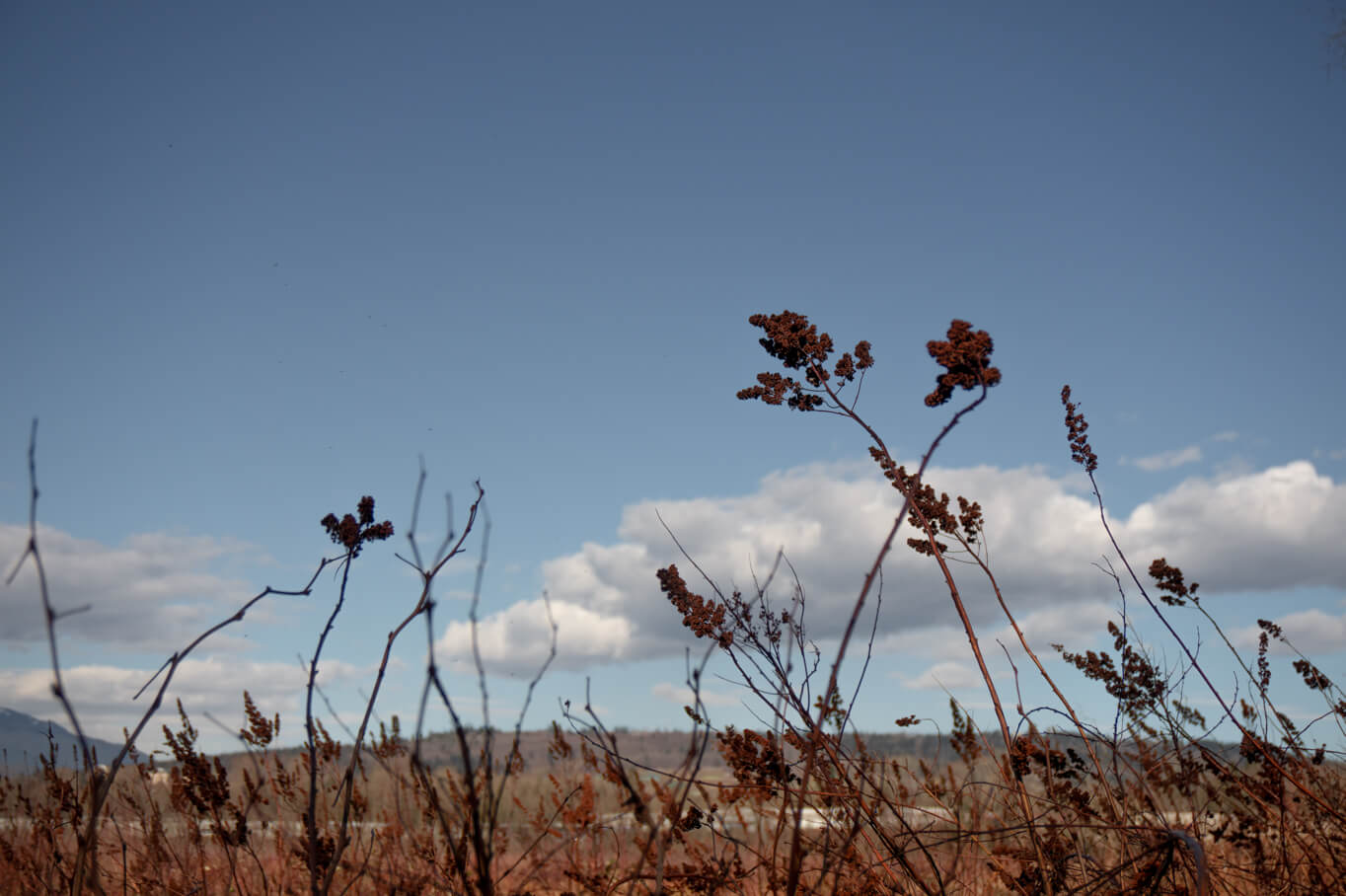 Burnaby Lake - Gräser