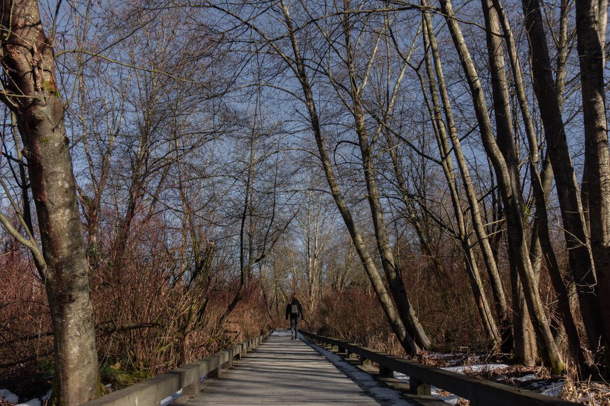 Burnaby Lake - Holzweg zwischen Bäumen