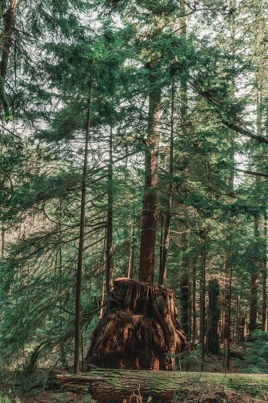 Cedar Trail Vancouver
