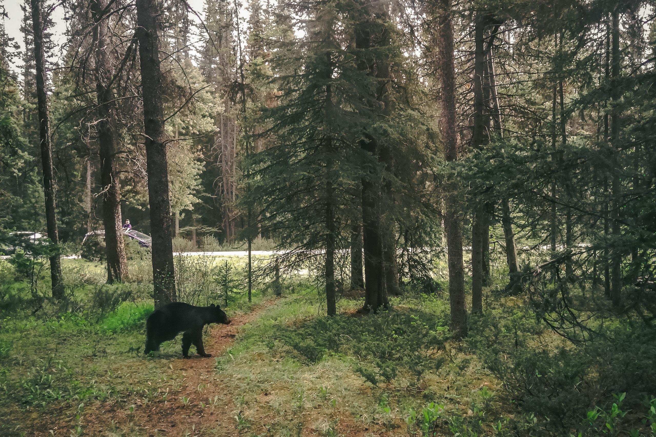 kleiner Schwarzbär