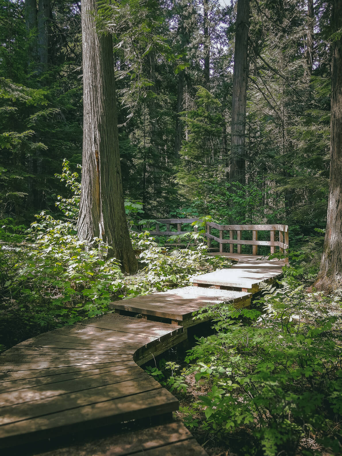 Giant Cedar Trail