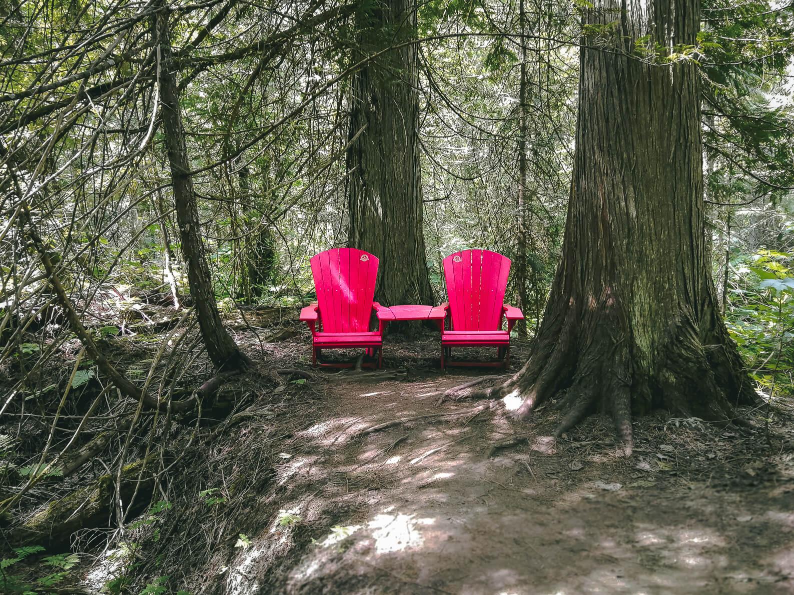 Skunk Cabbage Trail